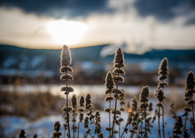 Winter Walk by Amy Mitchell