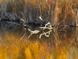 reflection of shoreline at Dugan lake, 150 Mile house By Rebecca Pickard