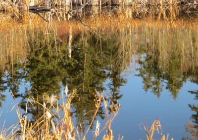 Fall shoreline pristine Dugan Lake!  By Rebecca Pickard