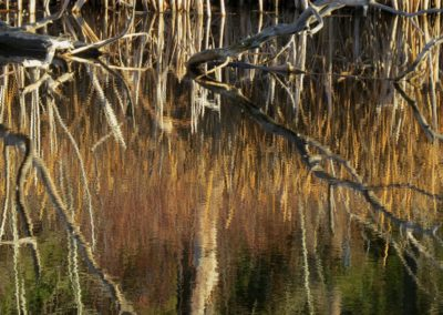 one more reflection of Dugan lake shoreline By Rebecca Pickard