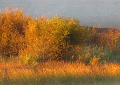 shore colors williams lake  By Rebecca Pickard