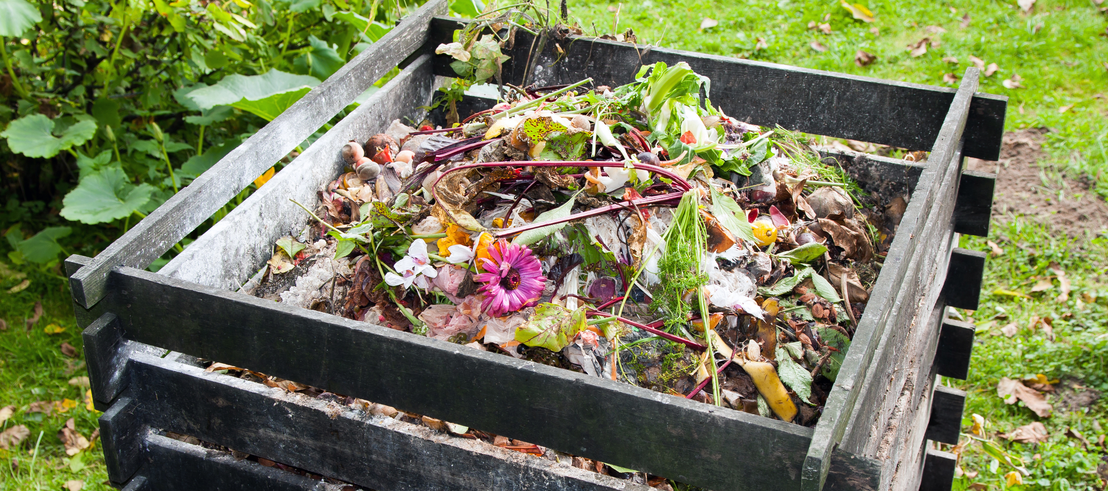 composting and plant growth Organic farming :: compost: composting composting - an overview   or heavy metal accumulation and may adversely affect plant growth, soil organisms,.